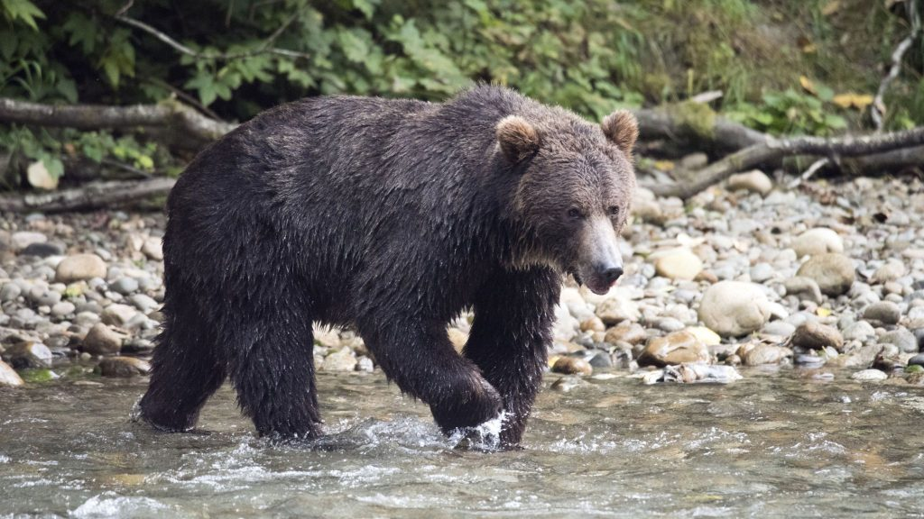 Mother and baby killed in grizzly bear attack in Canada